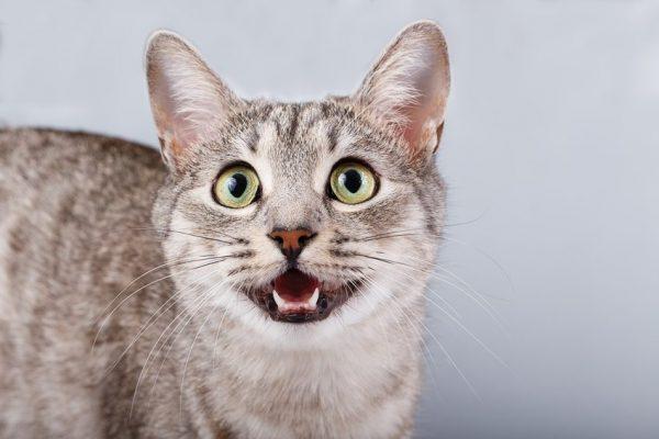 site de rencontre choisir chat coquin